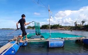 Quảng Trị: Anh thanh niên nuôi cá vược lồng tự nhiên trên sông cho thu nhập ổn định
