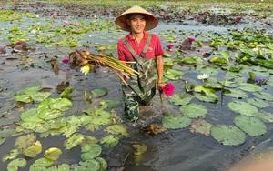 Hà Nam: Ông chủ xưởng cơ khí về quê trồng hoa súng, hoa sen cảnh, thu tiền tỷ mỗi năm