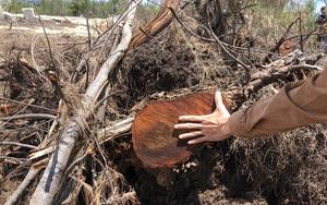 Bình Định: Chủ đầu tư điện mặt trời để rừng phòng hộ bị phá tan hoang vì...dịch Covid-19?