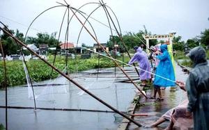 Quảng Nam: Cao thủ không bằng tranh thủ, sau mưa lớn, người dân giăng lưới bắt cá mưu sinh