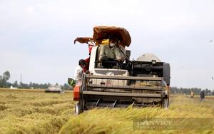 Long An: Đặc sản chín rộ mất giá, nông dân thiệt hại 5 triệu đồng/ha