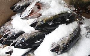 Xuất khẩu thủy sản sang các thị trường chủ lực giảm mạnh trong tháng 8/2021