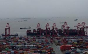 2 cảng biển tấp nập nhất Trung Quốc tạm ngừng hoạt động do bão, chuỗi cung ứng toàn cầu thêm lao đao