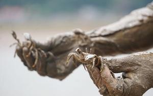 Khều là con đặc sản gì mà cứ chớm thu, người dân Hậu Lộc lại rủ nhau đi săn ở ven rừng ngập mặn?