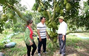 """Thanh Hoá: Mô hình """"5 cùng"""" giúp nông dân trồng mít Thái làm giàu"""