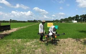 """Đây là bí quyết nơi này chinh phục đất nhiễm phèn mặn, phụ thuộc """"nước trời"""" trồng lúa ăn chắc"""