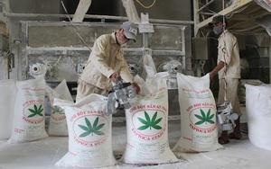 Tại sao Trung Quốc giảm mua loại nông sản này của Việt Nam, tăng mua của Thái Lan dù giá cao?