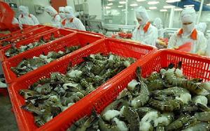 Xuất hiện đối thủ đáng gờm của Việt Nam trong cuộc đua giành thị phần xuất khẩu tôm vào EU