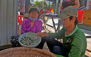 Cá linh non đã xuất hiện ở đầu nguồn, lũ thấp, cá đặc sản mùa nước nổi miền Tây khan hiếm, bán giá cao