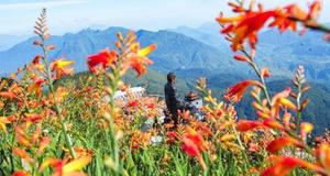 Tháng 9, Sa Pa đẹp nao lòng, ruộng bậc thang chuyển màu kỳ diệu, những triền hoa rực rỡ sắc màu