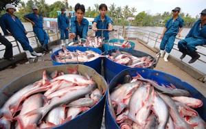 10 doanh nghiệp xuất khẩu cá basa, cá tra của Việt Nam không bị Mỹ áp thuế chống bán phá giá