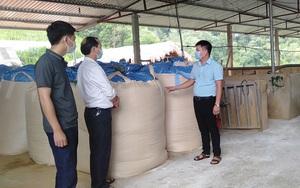 Yên Bái: Tỷ phú nông dân nuôi trâu vỗ béo nơi núi rừng Xuân Lai