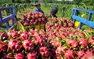 Một loại trái cây của Việt Nam chiếm 99,99% tổng lượng nhập khẩu của Trung Quốc, là quả gì?