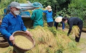 Hướng dẫn bà con khôi phục sản xuất trên cây lúa sau bão