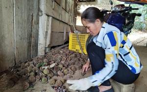 """Cao Bằng: Trở thành Nông dân Việt Nam xuất sắc 2021 sau 12 năm """"lăn lộn giữa rừng"""" trồng cây ra trái đầy lông nhọn"""