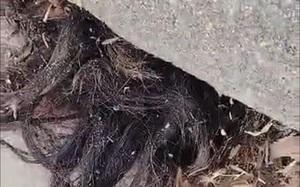 Hoảng hốt khi phát hiện tóc người thòi ra từ... một ngôi mộ