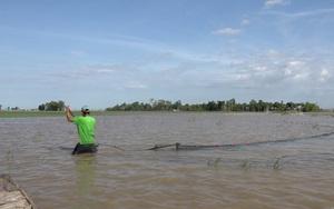 Đồng Tháp: Nước đã tràn đồng ở thượng nguồn, dân hối hả thả lưới, giăng câu bắt cá tôm trên đồng