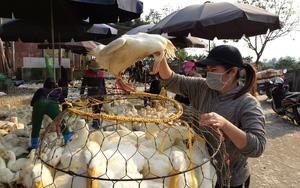 Giá gia cầm hôm nay 18/9: Cập nhật giá gà, vịt mới nhất tại ba miền, giá gà trắng đi ngang