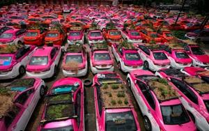 """Biến hàng trăm xe taxi đang """"đắp chiếu"""" thành vườn rau độc đáo ở Thái Lan"""