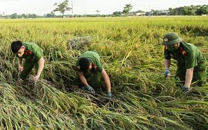 Ảnh ấn tượng tuần: Công an gặt lúa giúp dân và xếp dàng dài, chen chúc mua bánh trung thu