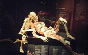 Choáng váng với cơ thể người phơi lồ lộ tại bảo tàng Đức