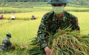 Nghệ An: Bộ đội Biên phòng vừa trực chốt chống dịch, vừa hỗ trợ người dân gặt lúa