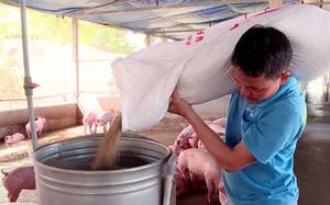 """Giá lợn hơi giảm sâu trong khi giá thành sản xuất tăng """"nóng"""", người chăn nuôi lỗ nặng"""