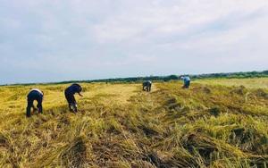 Kể chuyện làng: Lục ký ức trên cánh đồng quê