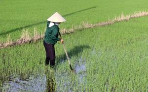 Tây Ninh: Nông dân quyết không bỏ ruộng hoang, chờ cơ hội nông sản tăng giá sau dịch