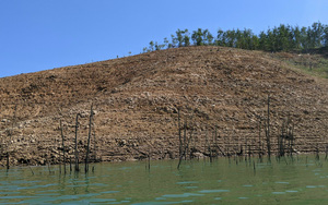 TT-Huế: Đề nghị truy thu tiền 3 doanh nghiệp thủy điện trồng 239ha rừng không có cây