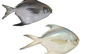 Con người đã ăn cá từ 40.000 năm trước