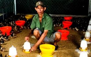 Tiền Giang: Nuôi giống gà hiếu chiến không để chọi mà bán thịt, mỗi năm anh nông dân lời cả tỷ đồng