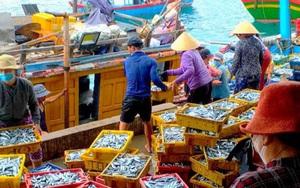 Bình Định: Dân ra biển đánh bắt được vô số cá nục, dù giá cá giảm 1/2 vì dịch Covid-19 dân vẫn trúng lớn