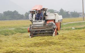 Quảng Bình: Số điện thoại đường dây nóng đề nghị hỗ trợ tiêu thụ nông sản trong mùa dịch Covid-19 là những số nào?
