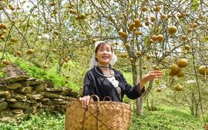 Địa điểm du lịch: Tháng 9 mùa đặc sản ở Hồng Thái chỉ với giá 20.000 đồng