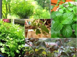 """Tự trồng 6 loại rau thảo mộc đẹp hữu ích khiến hàng xóm """"phát thèm"""""""