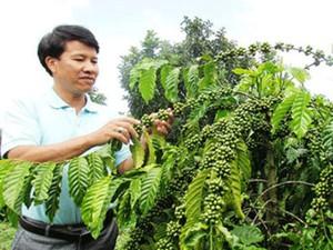 63.000 nông dân sẽ được hỗ trợ canh tác cà phê bền vững