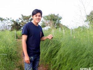 Tốt nghiệp Đại học loại giỏi, trai đẹp về quê trồng măng tây