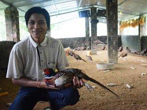 Không đụng hàng: Mở nhạc nuôi chim trĩ sinh sản, thắng lợi bất ngờ