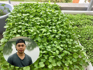 Chàng kỹ sư CNTT 9X điển trai mê trồng rau sân thượng hơn đi chơi