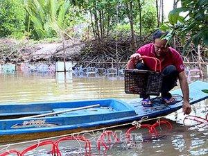 Cà Mau: Ở huyện này, dân nuôi cả loài tôm hung dữ, bán 1 triệu/ký