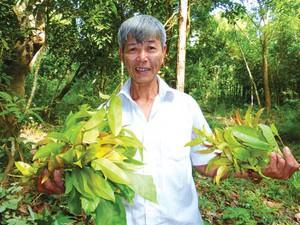 An Giang: Vượt qua thú dữ, rắn độc, hái rau rừng kiếm tiền triệu