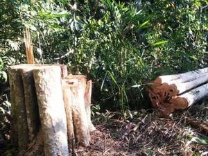 Khởi tố điều tra vụ phá rừng quy mô lớn tại Đắk Nông