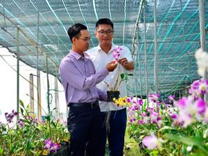 Kiên Giang: Cựu vận động viên cờ vua sở hữu vườn lan tiền tỷ