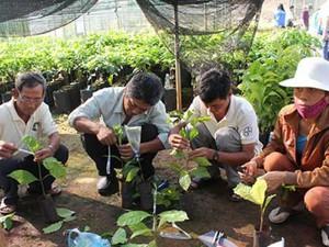 """Chuỗi cà phê bền vững: """"Lối thoát"""" cho người trồng cà phê?"""