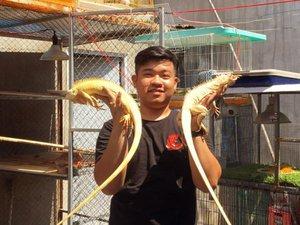 """Trai 97 nuôi cả trăm con """"quái vật"""" thú cưng rồng Nam Mỹ ở An Giang"""