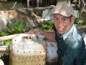 CLIP: Nuôi lươn đồng trong can nhựa độc lạ của lão nông ở Hậu Giang