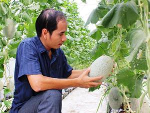 Biến 8000m2 đất thành nhà màng, trồng dưa lưới hốt bạc tỷ