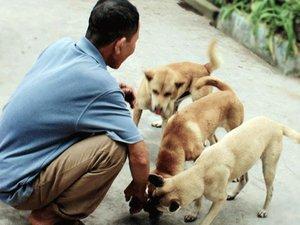 """Xuyên đêm dẫn đàn """"chó thầy"""" đi săn thú rừng trái phép ở Hoành Sơn"""
