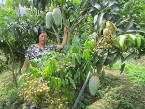 Canh tác lạ: Trồng 3 tầng cây trong 1 vườn, thu nhập tăng gấp đôi
